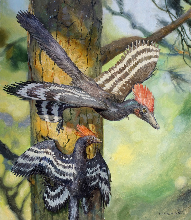 Anchiornis.sm
